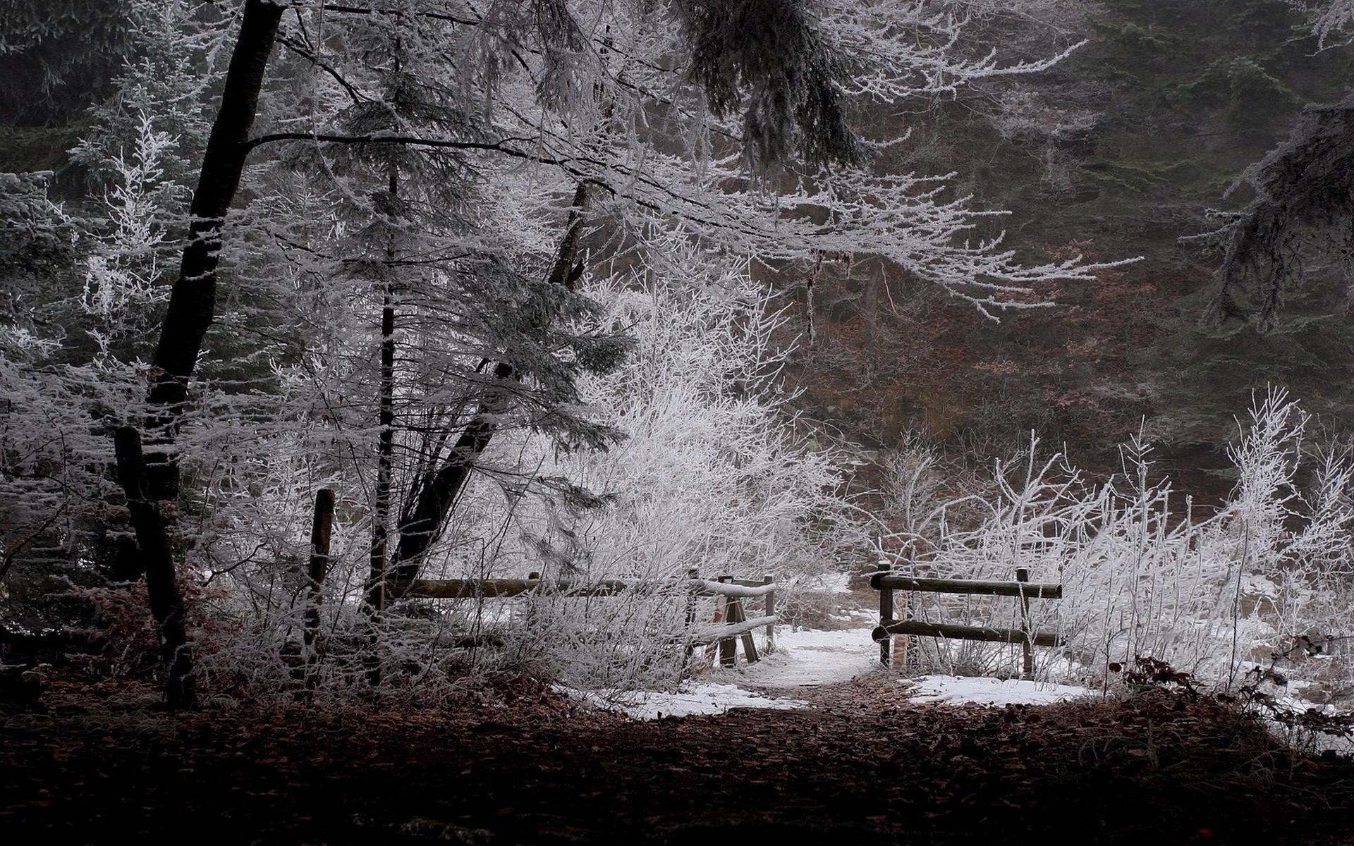 Черно белая зима 23 фотография